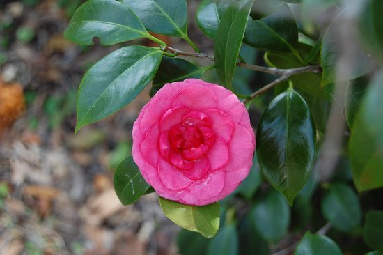 Jacksonville Arboreteum & Gardens: in bloom