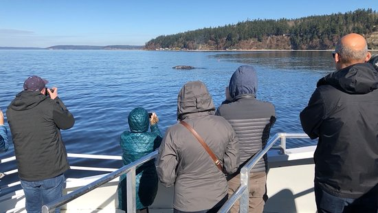 Puget Sound Express - Day Trips: Gray whale sighting 3/11/18