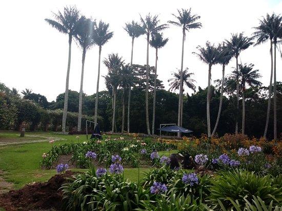 20180214 154542 picture of jardin botanico de for Jardin botanico bogota