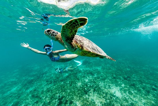Kihei, HI: Swim with the turtles