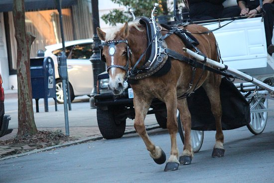 Madison Square: Horse carriages are available in the area