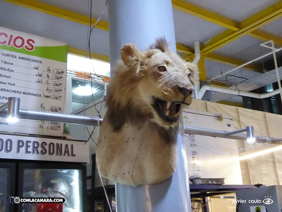 Mercado de San Juan: Se comieron al aleón y dejaron la cabeza de adorno :(
