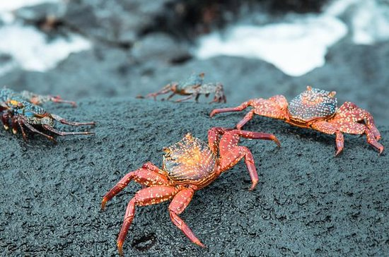 5- or 6-Day Galapagos All Inclusive...