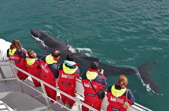 Avvistamento di balene dal centro