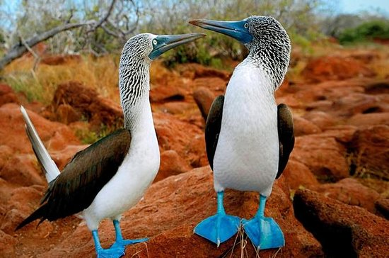 7-Day All Inclusive Galapagos 3 Islands Tour