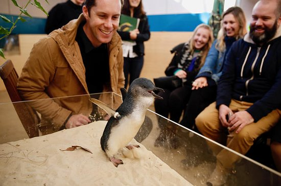 Tickets to Little Penguin Experience at Melbourne Zoo