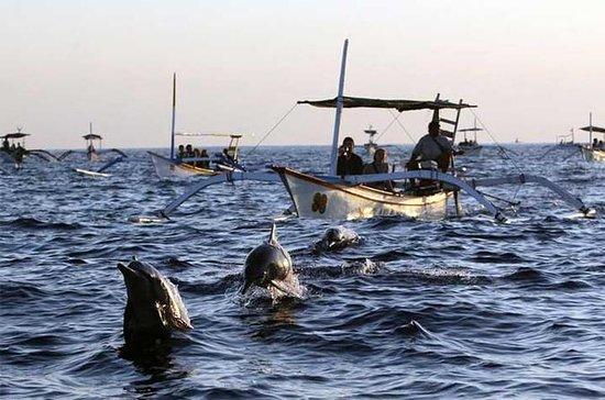 Lovina DolphinとTanah Lotツアー