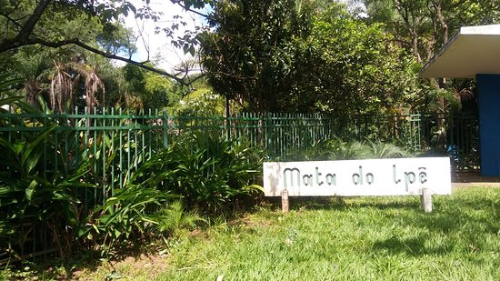 Mata do Ipê