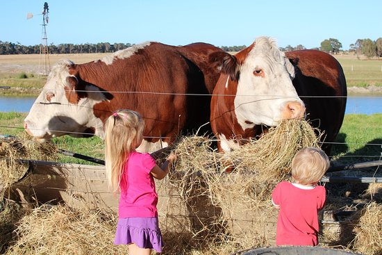 Taunton Farm Holiday Park: Daily Animal Feeding - fun for the whole family