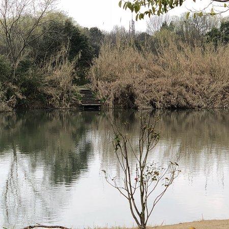Xixi Wetland Park: photo1.jpg