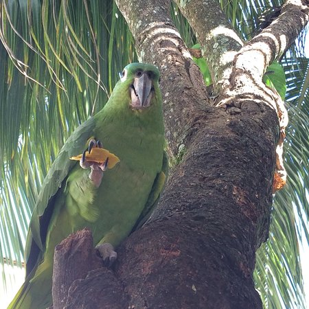 Jungle Top Zipline Adventure: photo7.jpg