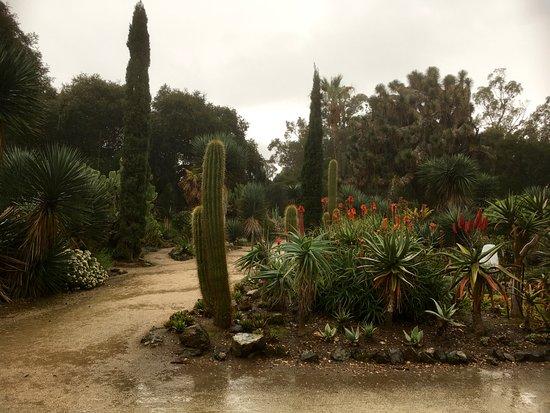 Palo Alto, CA: The Campus Cactus Garden