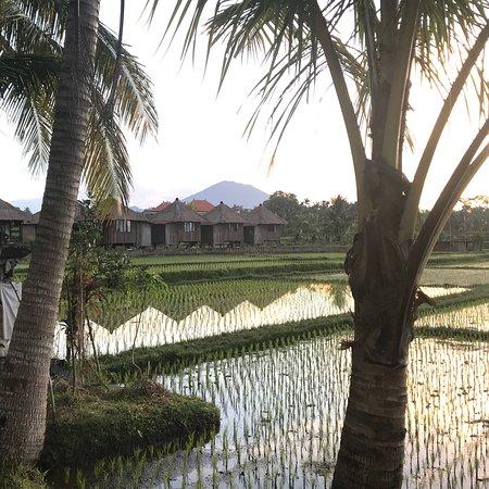 Ubud Sari Health Resort: photo4.jpg