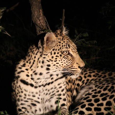 Timbavati Private Nature Reserve, South Africa: photo4.jpg