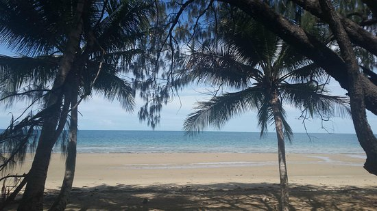 Lychee Tree Holiday Apartments: lychee four mile beach