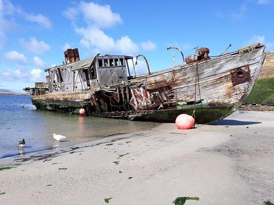 West Falkland, Falklandsöarna: New Island