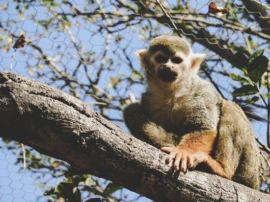 Eastern Cape, Sudáfrica: Squirrel monkey
