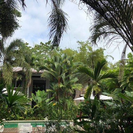 Cocles, Costa Rica: photo6.jpg