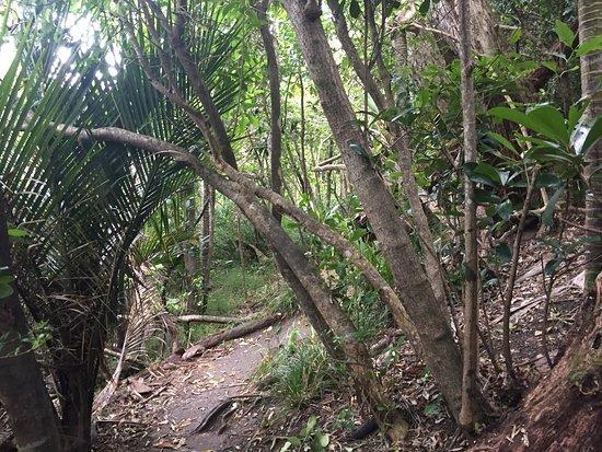 Matapouri ภาพถ่าย