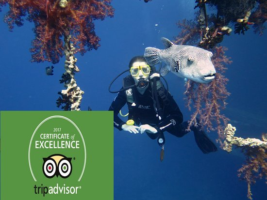 Aqaba, Jordan: Thanks for tripadvisor