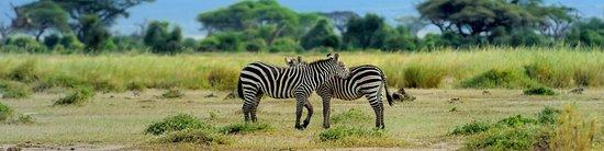 Arusha, Tanzania: Zebra
