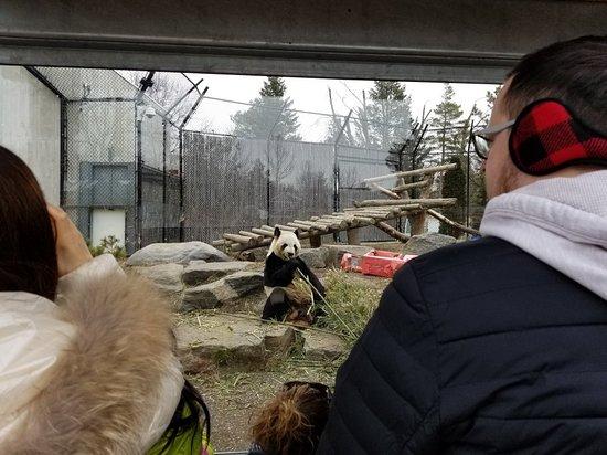 Toronto Zoo : 20180312_133624_large.jpg