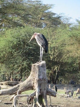 Rift Valley Province, كينيا: marabout