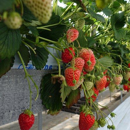 Miharasi Farm: photo3.jpg