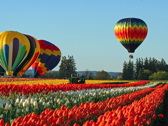 Oregon City, OR: Wooden Shoe Tulip Festival