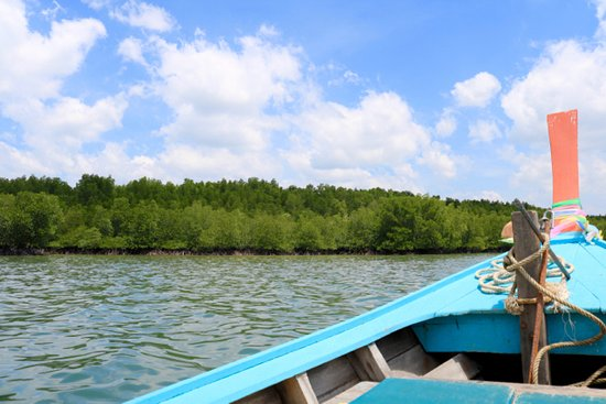 Green Andaman Travel: Mangrove forest at Tap Lamu