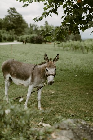 Faux, Francia: One of our donkeys