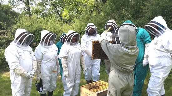 13 Bees Beekeeping Taster Sessions
