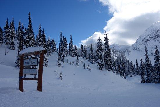 Fernie Alpine Resort : Top of Siberia Bowl