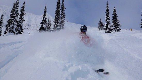 Fernie Alpine Resort : Powder day in Lizard Bowl!