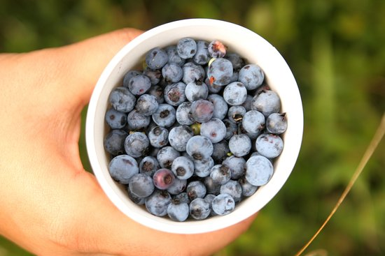 Washington, ME: Blueberry season is the best season!