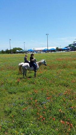Rockdale, TX: Wildflower Trail Ride