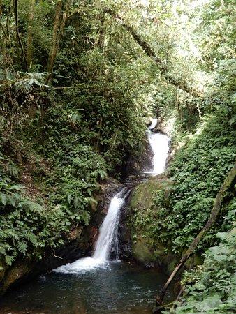 Monteverde Cloud Forest Reserve Picture