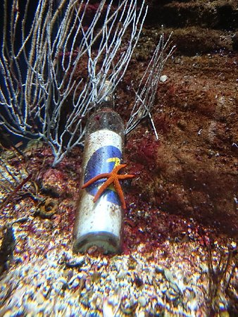 Aquarium Mare Nostrum: DSC_0270_large.jpg