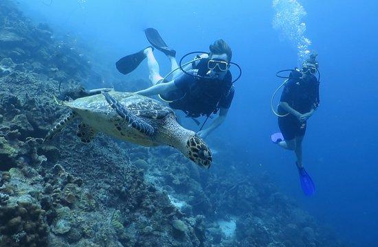 Caribbean Sea Sports Dive Shop: Een van de mooie foto's van tijdens het duiken.