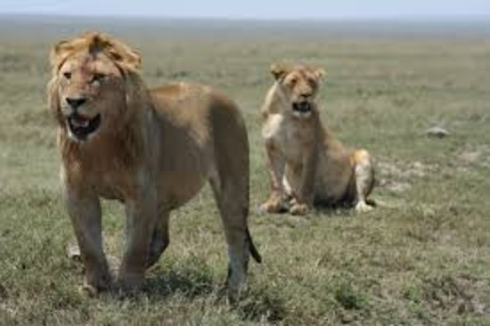 Natural Earth Tours & Safaris Ltd