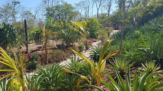 Playa Grande, Costa Rica: 20180304_141743_large.jpg
