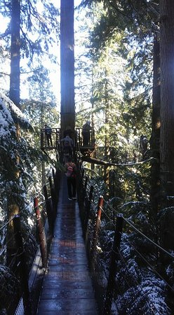 North Vancouver, Canada: Walking amongst the trees