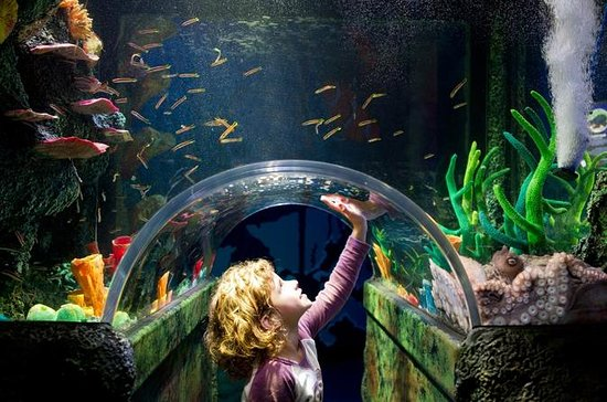 Sydney Attraction Pass: acuario SEA...