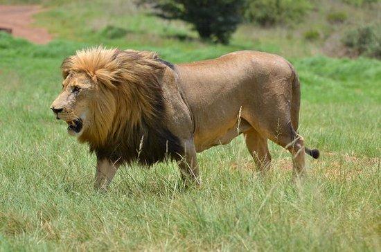 Rinoceronte & Lion Park