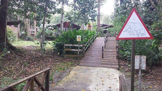 Borneo Nature Lodge: Great setting