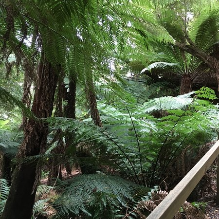 Deloraine, Australia: photo4.jpg