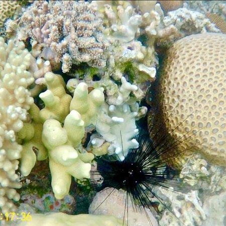 Coral Garden: photo9.jpg