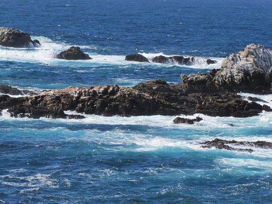 Point Lobos: Seals on the rocks at Pt. Lobos.
