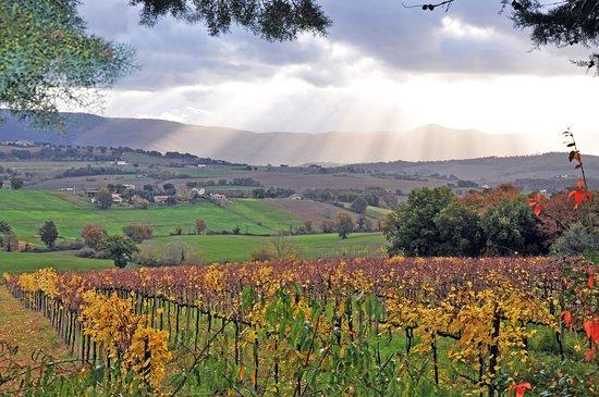 Collevalenza, Italia: La favolosa vigna Zazzera