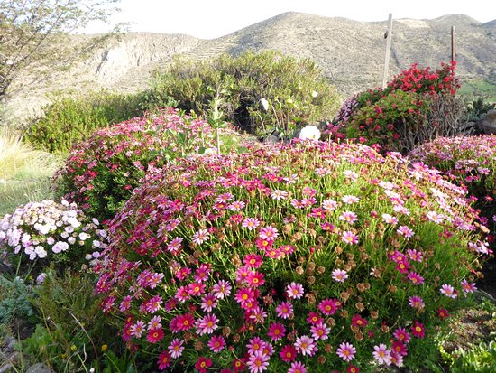 Le joli jardin fleuri. - Bild von Hotel Qantati, Putre - TripAdvisor